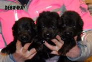05_Puppies_Uragan_Yosha_GIRLS