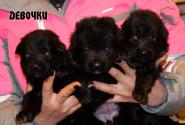 06_Puppies_Uragan_Yosha_GIRLS