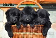 08_Puppies_Uragan_Yosha_GIRLS_BL
