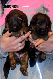 01_Puppies_Garry_Shveciya_GIRLS