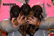 02_Puppies_Garry_Shveciya_BOYS