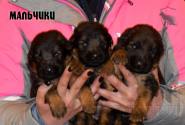 03_Puppies_Garry_Shveciya_BOYS