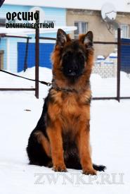 01_Puppies_Garry_Ullana_ORFEO_LH