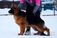 04_Puppies_Garry_Ullana_ONSEN_LH