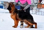 06_Puppies_Garry_Ullana_ORFEO_LH