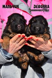 10_Puppies_Mike_Furiya_BOY_GIRL_LH
