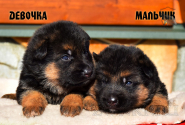16_Puppies_Mike_Furiya_BOY_GIRL