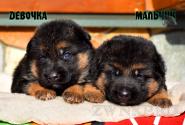 17_Puppies_Mike_Furiya_BOY_GIRL