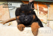 30_Puppies_Mike_Furiya_GILZA_LH