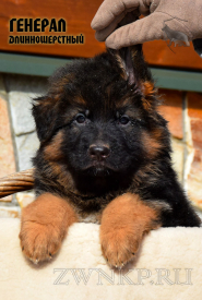 32_Puppies_Mike_Furiya_GENERAL_LH
