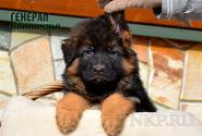 33_Puppies_Mike_Furiya_GENERAL_LH