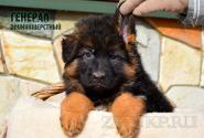 34_Puppies_Mike_Furiya_GENERAL_LH
