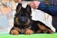 35_Puppies_Mike_Furiya_GELIKA_LH