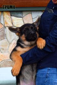 36_Puppies_Mike_Furiya_GRIMO