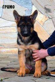 37_Puppies_Mike_Furiya_GRIMO