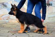 38_Puppies_Mike_Furiya_GRIMO