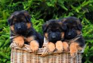 01_Puppies_Garry_Loreal_GIRLS_LH