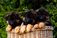 02_Puppies_Garry_Loreal_GIRLS_LH