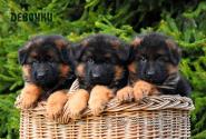 04_Puppies_Garry_Loreal_GIRLS_LH