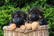 05_Puppies_Garry_Loreal_BOYS_LH
