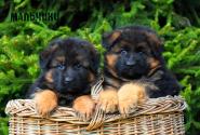 06_Puppies_Garry_Loreal_BOYS_LH