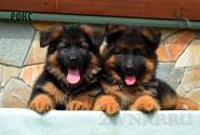 08_Puppies_Garry_Loreal_ROKS_LH