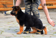 02_Puppies_Mike_Lamanta_LURDES