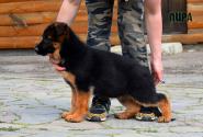 04_Puppies_Mike_Lamanta_LIRA