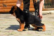 06_Puppies_Mike_Lamanta_LARRI
