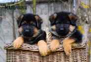 05_Puppies_Mike_Bakkara_BOYS