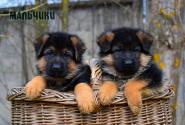 06_Puppies_Mike_Bakkara_BOYS