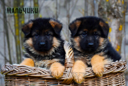 07_Puppies_Mike_Bakkara_BOYS