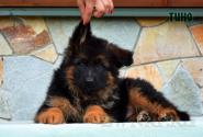 13_Puppies_Mike_Bakkara_TINO_LH