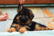 14_Puppies_Mike_Bakkara_TEJP_LH