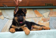 15_Puppies_Mike_Bakkara_TONIO