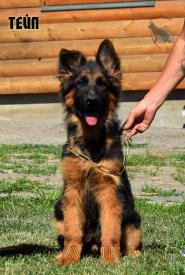 16_Puppies_Mike_Bakkara_TEJP_LH