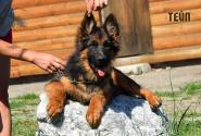17_Puppies_Mike_Bakkara_TEJP_LH