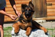 18_Puppies_Mike_Bakkara_TEJP_LH