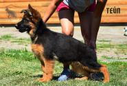 19_Puppies_Mike_Bakkara_TEJP_LH