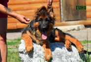 20_Puppies_Mike_Bakkara_TINO_LH