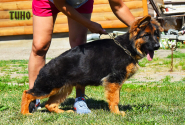 21_Puppies_Mike_Bakkara_TINO_LH