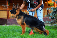 23_Puppies_Mike_Bakkara_TEJP_LH