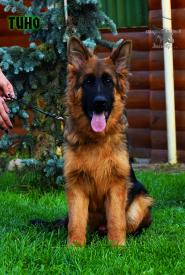 24_Puppies_Mike_Bakkara_TINO_LH