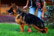 25_Puppies_Mike_Bakkara_TINO_LH