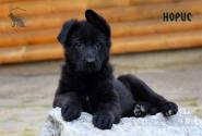 01_Puppies_Uragan_BFortuna_GIRL
