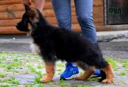 08_Puppies_Uragan_GUdacha_FIL_LH