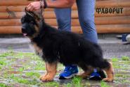 14_Puppies_Uragan_GUdacha_FAVORIT_LH