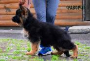 15_Puppies_Uragan_GUdacha_FAVORIT_LH