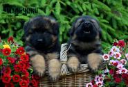 06_Puppies_Parad_Lambada_BOYS_LH