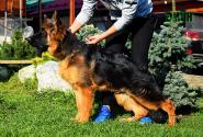 45_Puppies_Parad_Lambada_E`MIN_LH
